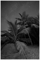 Palm trees and starry sky, Salomon Beach. Virgin Islands National Park ( black and white)