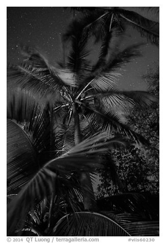 Coconut trees at night, Salomon Beach. Virgin Islands National Park (black and white)