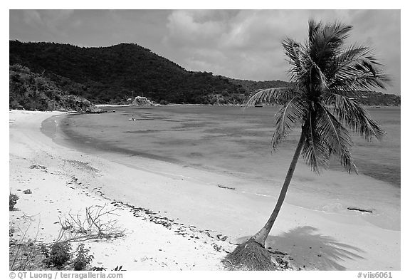Beach and palm tree in Hurricane Hole Bay. Virgin Islands National Park (black and white)