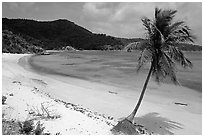 Beach and palm tree in Hurricane Hole Bay. Virgin Islands National Park, US Virgin Islands. (black and white)