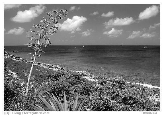 Centenial flower and ocean on Ram Head. Virgin Islands National Park (black and white)