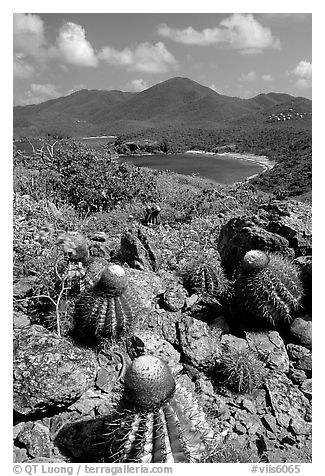 Cactus on Ram Head. Virgin Islands National Park (black and white)