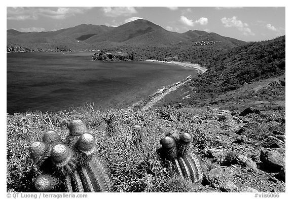 Cactus and bay, Ram Head. Virgin Islands National Park (black and white)