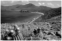 Cactus and bay, Ram Head. Virgin Islands National Park, US Virgin Islands. (black and white)