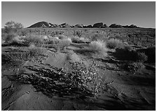 Pink sand dunes and Olgas. Olgas, Uluru-Kata Tjuta National Park, Northern Territories, Australia (black and white)