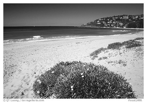 Beach north of the city. Sydney, New South Wales, Australia (black and white)