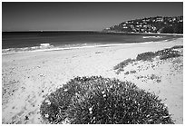 Beach north of the city. Sydney, New South Wales, Australia ( black and white)
