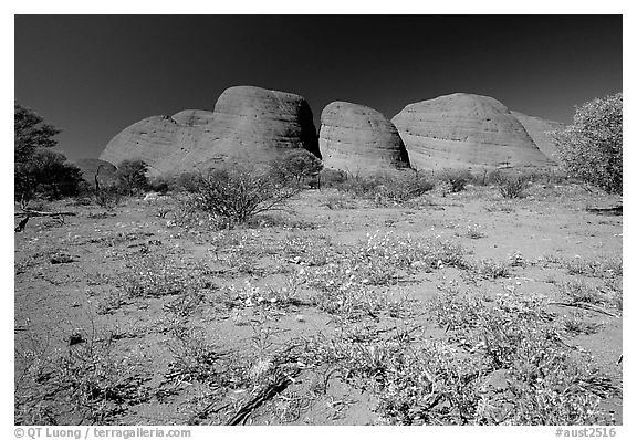 Olgas, mid-day. Olgas, Uluru-Kata Tjuta National Park, Northern Territories, Australia (black and white)