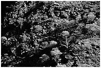 Kings Canyon slopes, Watarrka National Park. Northern Territories, Australia ( black and white)