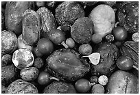 Rainforest fruits, Cape Tribulation. Queensland, Australia (black and white)