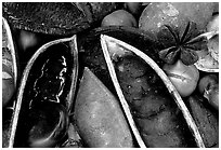 Rainforest beans, Cape Tribulation. Queensland, Australia (black and white)