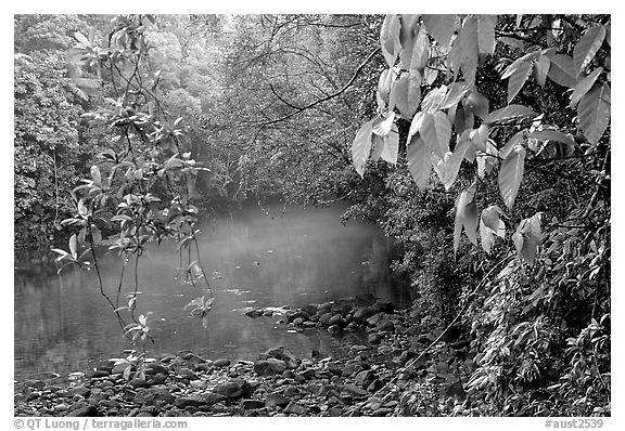 River with mist raising, Cape Tribulation. Queensland, Australia (black and white)