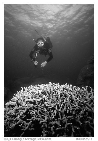 Scuba diver and coral. The Great Barrier Reef, Queensland, Australia (black and white)