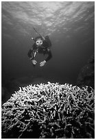 Scuba diver and coral. The Great Barrier Reef, Queensland, Australia ( black and white)