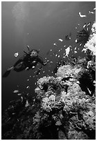 Scuba diver, coral, and fish. The Great Barrier Reef, Queensland, Australia ( black and white)