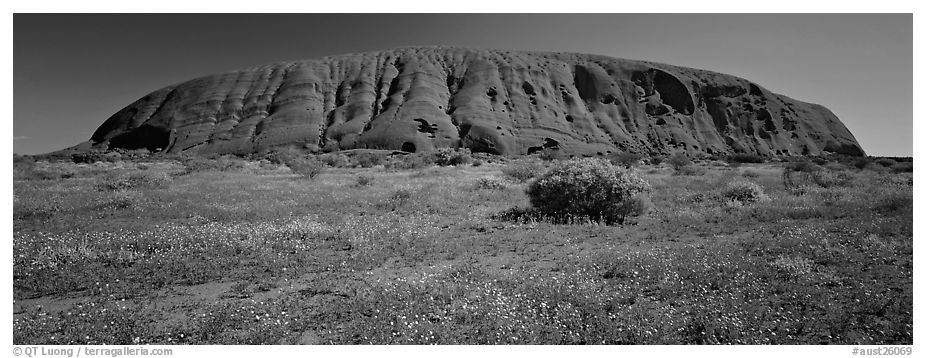 Black And White Images Of Uluru
