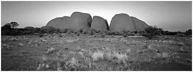 Olgas with sunset glow. Olgas, Uluru-Kata Tjuta National Park, Northern Territories, Australia (Panoramic black and white)