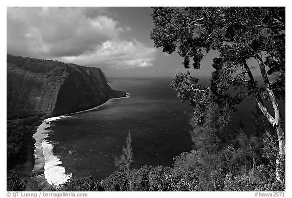 Black and white picture photo tree and coastline above waipio valley big island hawaii usa