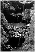 Umauma Falls. Big Island, Hawaii, USA (black and white)