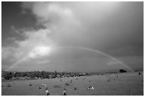 Rainbow over grassy cemetery. Maui, Hawaii, USA ( black and white)