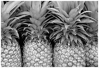 Pinapple. Maui, Hawaii, USA ( black and white)