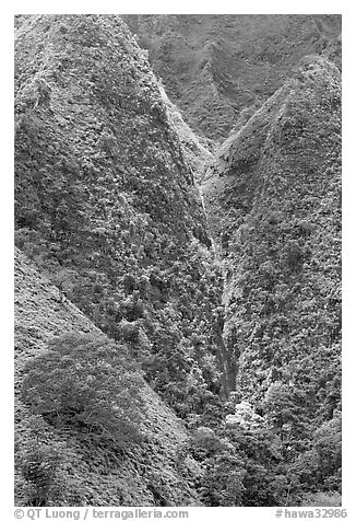 Steep walls covered with vegetation, Koolau Mountains. Oahu island, Hawaii, USA (black and white)