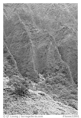 Hillside and Pali. Oahu island, Hawaii, USA (black and white)