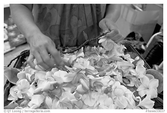 Fresh flowers used for lei making, International Marketplace. Waikiki, Honolulu, Oahu island, Hawaii, USA (black and white)