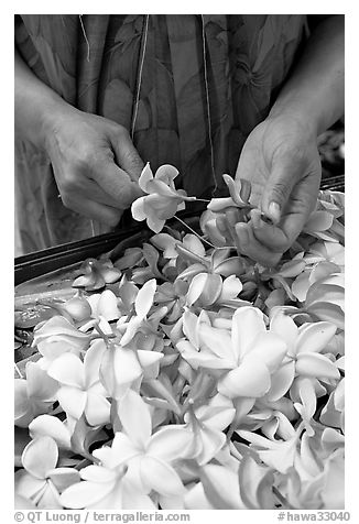 Hands preparing a fresh flower lei, International Marketplace. Waikiki, Honolulu, Oahu island, Hawaii, USA (black and white)