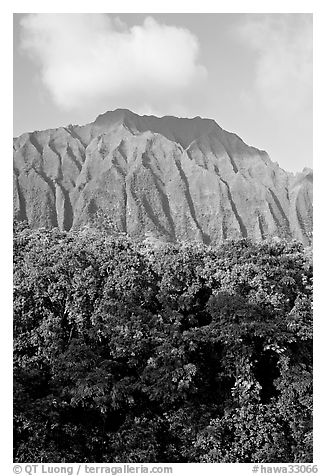 Tropical forest and fluted  Koolau Mountains. Oahu island, Hawaii, USA (black and white)