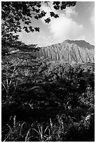 Tropical forest and  Koolau Mountains. Oahu island, Hawaii, USA (black and white)