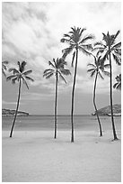 Palm trees and empty beach, Hanauma Bay. Oahu island, Hawaii, USA (black and white)
