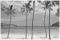 Palm trees and empty beach, Hanauma Bay. Oahu island, Hawaii, USA ( black and white)