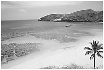Palm tree,  beach, and Hanauma Bay with no people. Oahu island, Hawaii, USA ( black and white)