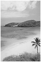 Palm tree,  beach, and Hanauma Bay with no people. Oahu island, Hawaii, USA (black and white)