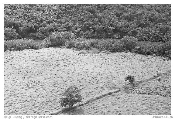 Trees, field, and ancient wall,  Wailua River Valley. Kauai island, Hawaii, USA (black and white)
