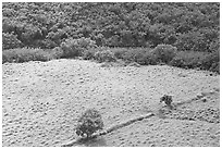 Trees, field, and ancient wall,  Wailua River Valley. Kauai island, Hawaii, USA ( black and white)