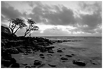 Fisherman, trees, and ocean, dawn. Kauai island, Hawaii, USA (black and white)