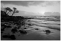 Windblown trees and ocean, Lydgate Park, sunrise. Kauai island, Hawaii, USA (black and white)