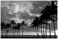 Palm trees and clouds, Kapaa, sunrise. Kauai island, Hawaii, USA (black and white)