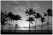 Palm trees, sunrise, Kapaa. Kauai island, Hawaii, USA (black and white)