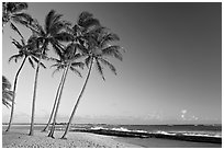 Palm trees and beach, Salt Pond Beach, late afternoon. Kauai island, Hawaii, USA ( black and white)