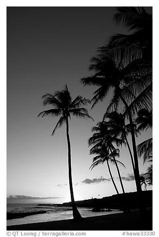 Black and white picture photo palm trees and beach salt pond beach sunset kauai island hawaii usa
