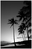 Palm trees and beach, Salt Pond Beach, sunset. Kauai island, Hawaii, USA (black and white)