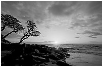 Wind twisted trees and sunrise, Lydgate Park. Kauai island, Hawaii, USA (black and white)