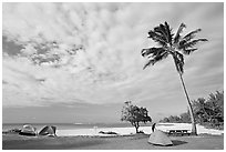 Tents and palm trees, Haena beach park. North shore, Kauai island, Hawaii, USA (black and white)