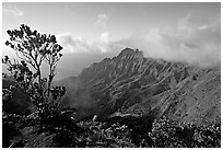 Kalalau Valley and tree, from the Pihea Trail, late afternoon. Kauai island, Hawaii, USA ( black and white)