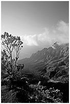 Kalalau Valley and tree, late afternoon. Kauai island, Hawaii, USA ( black and white)