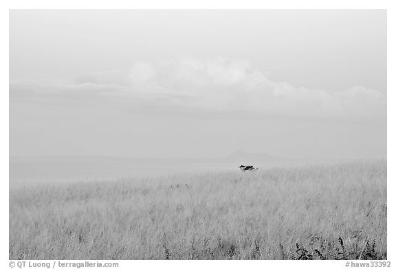 Grasses, ocean, and cloud, dawn. Kauai island, Hawaii, USA (black and white)