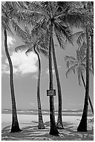 Coconut trees, with warning sign, Salt Pond Beach. Kauai island, Hawaii, USA ( black and white)